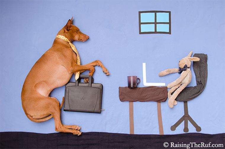 Rufus, der träumende Hund