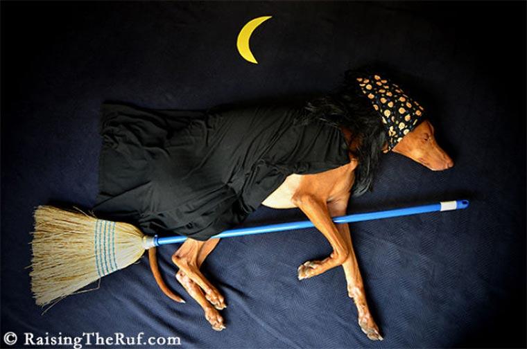 Rufus, der träumende Hund Raising-the-ruf_02
