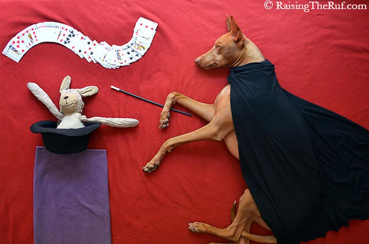 Rufus, der träumende Hund Raising-the-ruf_04