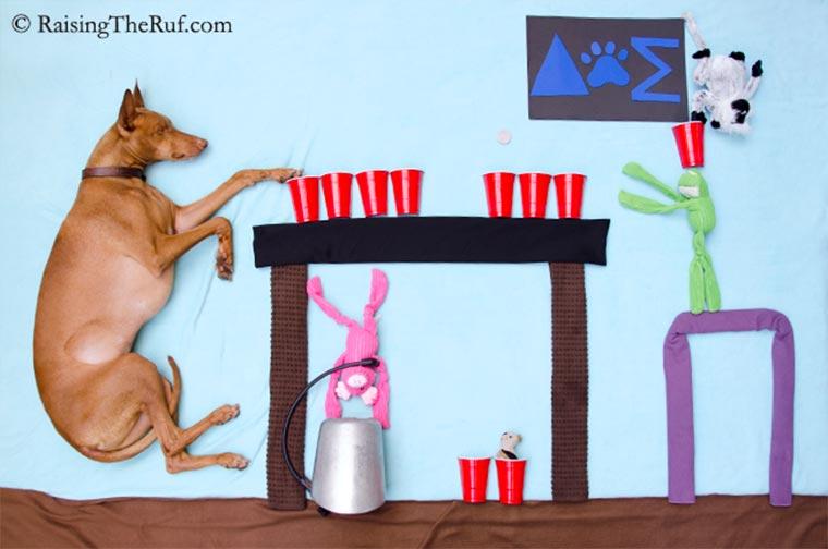 Rufus, der träumende Hund Raising-the-ruf_06