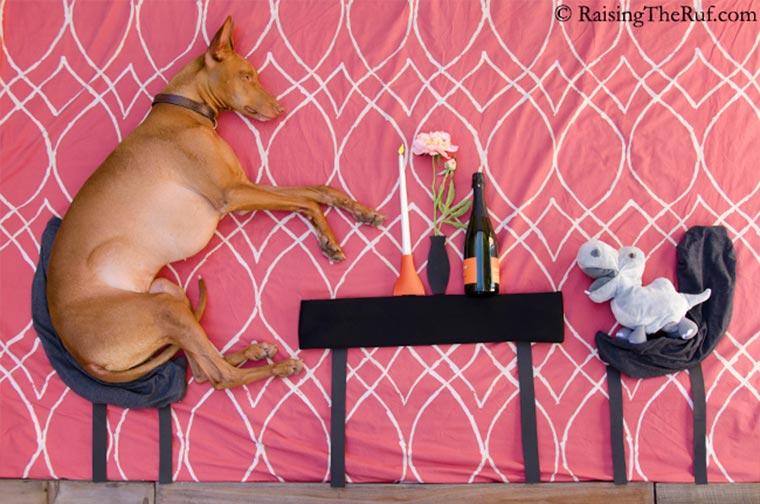 Rufus, der träumende Hund Raising-the-ruf_07