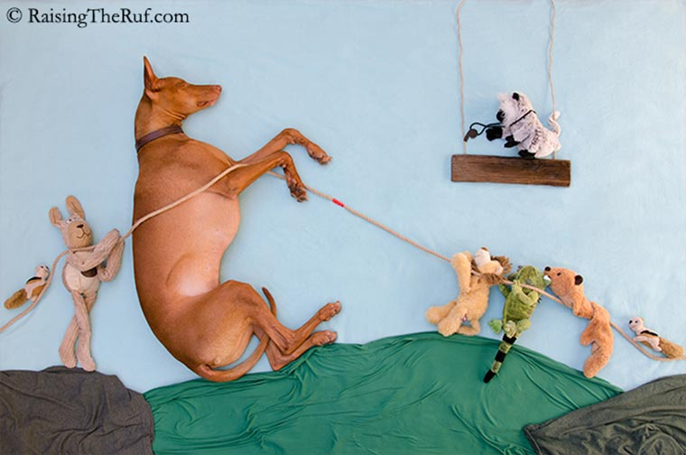 Rufus, der träumende Hund Raising-the-ruf_08