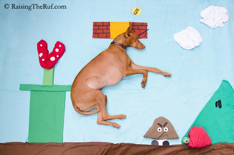 Rufus, der träumende Hund Raising-the-ruf_09