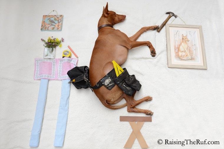 Rufus, der träumende Hund Raising-the-ruf_10
