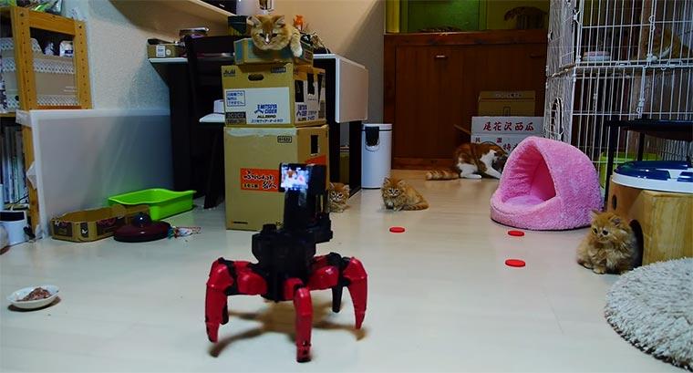 Katzen vs. Roboter Robot-vs-cats