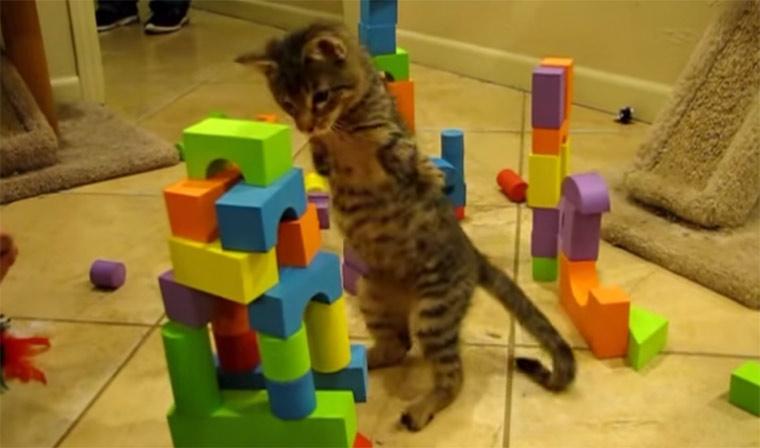 Zweibeinige Katze zerstört Stadt two-legged-catzilla