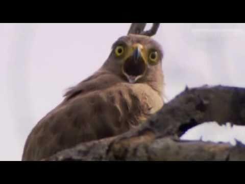 Dramatic Eagle