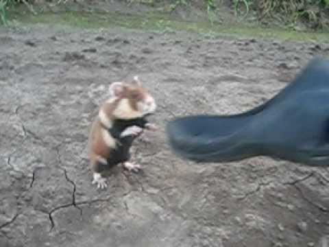 Vorsicht vor dem Ninja-Hamster!