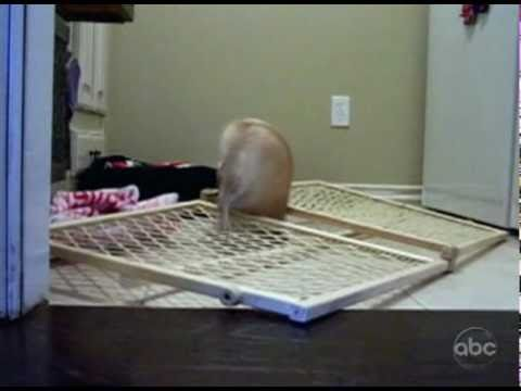 Chihuahua Gefängnisausbruch
