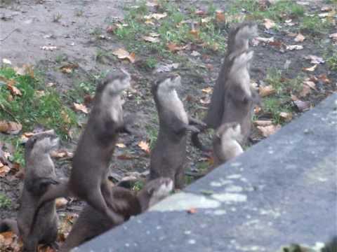 Da freuen sich die Otter!
