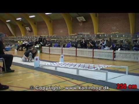 Dänische Meisterschaft im Hasen-Hüpfen