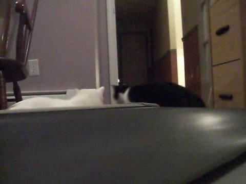 Katzen vs. Laufband