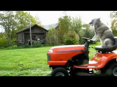 Oh, ich muss noch Rasen mähen
