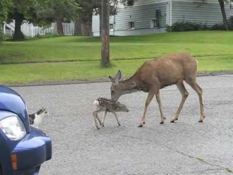 Bambis Amokmutter