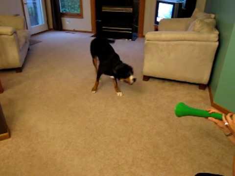 Hund vs. Vuvuzela