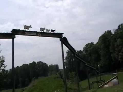 Die Ziegenbrücke