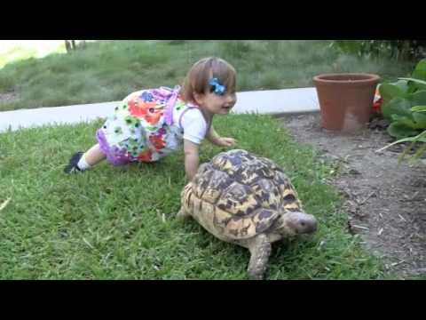 Kleinkind + Schildkröte = Epic sweetness