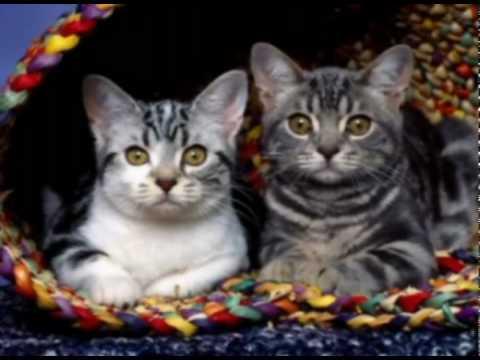 LOST: Das Wichtigste in einer Minute Katzen