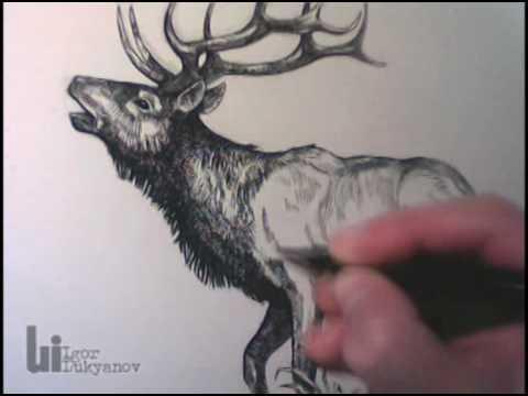 Timelapse Wildlife-Zeichnungen