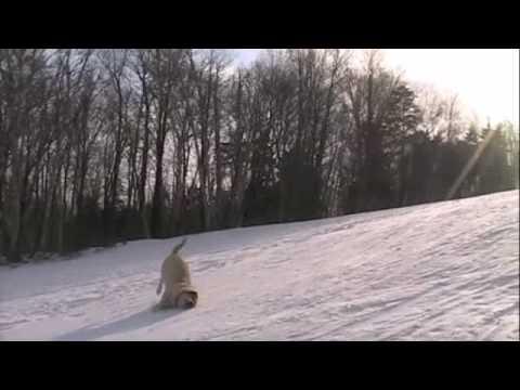 Hundeschlittenfahren