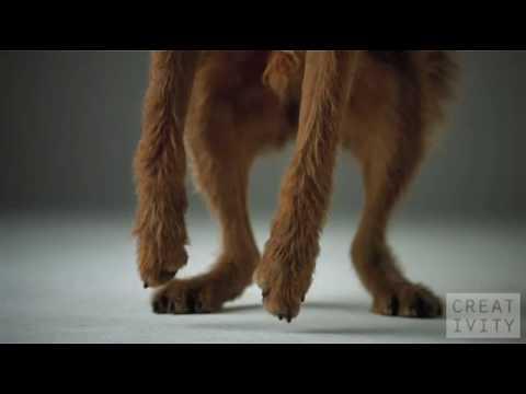 Hunde fangen Fressen in Slowmotion