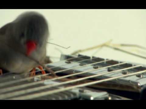 Spatzen spielen E-Gitarre