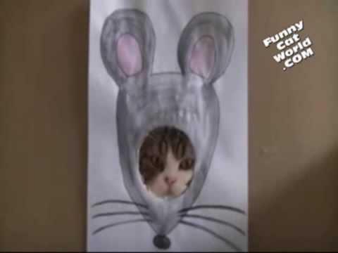 1 Minute Katzen-WTF?