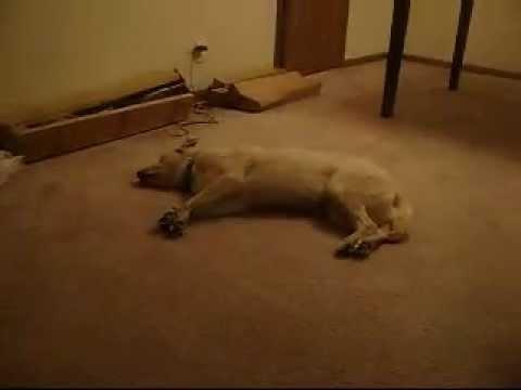 Der Schlafwandelnde Hund