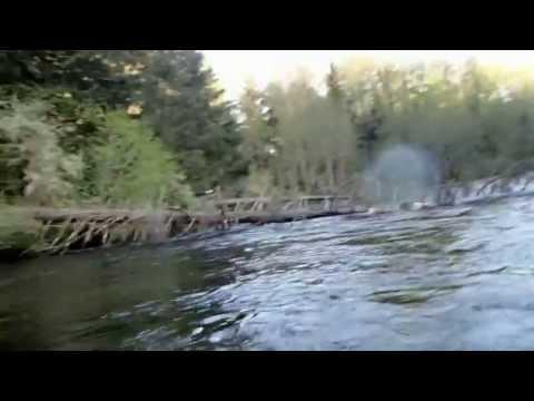 Adler schnappt Fisch von der Angel