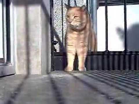 Nein, Garfield. Du hattest genug Lasagne!