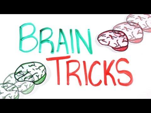 Wie unser Gehirn funktioniert