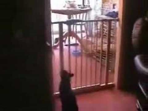 Katzenklassiker