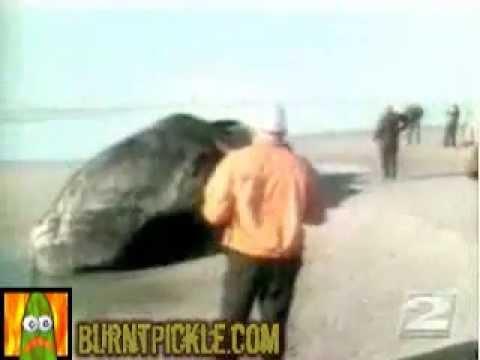 Ein Wal und lauter Nüsse