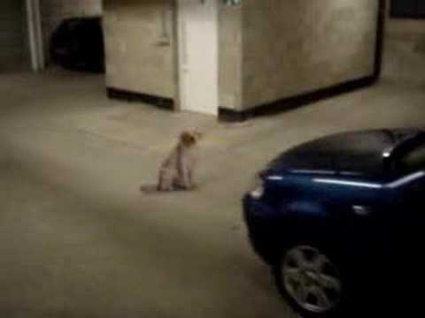 Hund wird beinahe überfahren