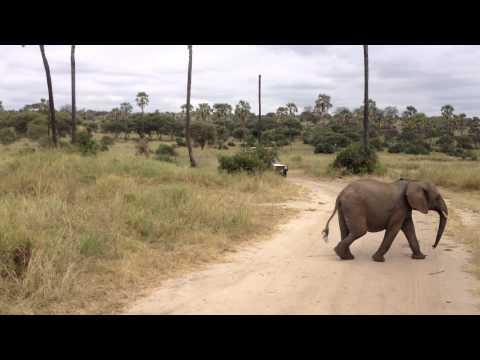 Straßenüberquerung einer Elefantenfamilie