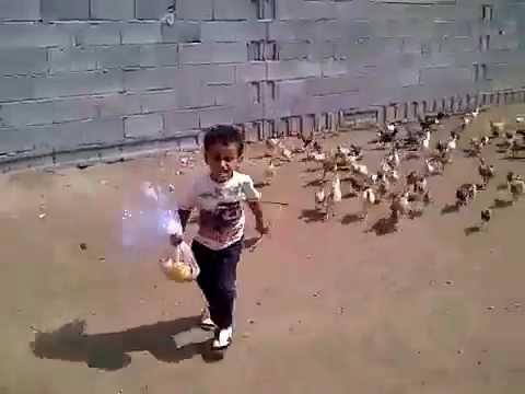ChickenChickenChickenChicken