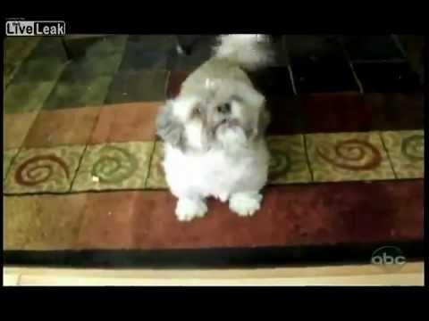 Der schreiende Hund