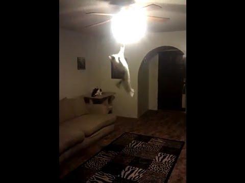 Katze meint: Don't turn the lights on