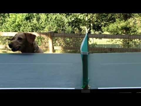 Hund verrückt nach Tischtennis