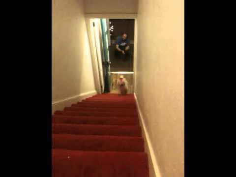 WTF? Hund mit Hose im Handstand die Treppe runter