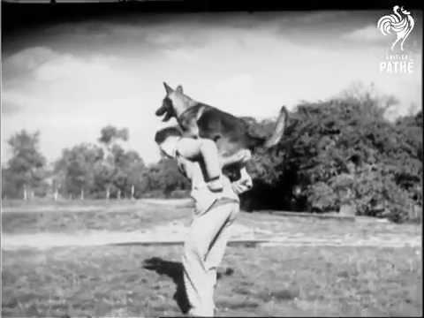 Hundehochsprung in den 30er Jahren