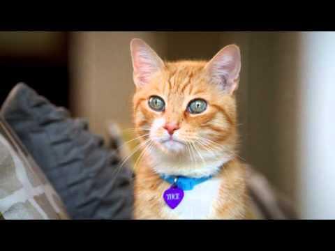 Katzenverständnis von Sandkastenkindern