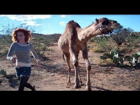 Rennen: Frau vs. Kamel