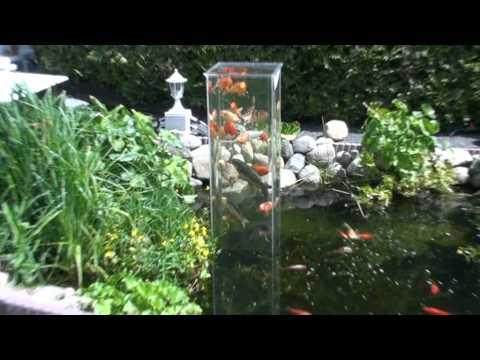 Aussichtsturm für Fische