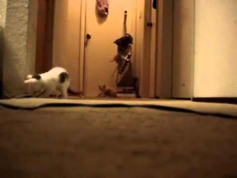 Kätzchen vs. Staubsauger