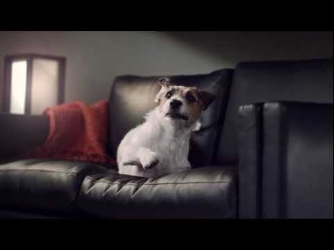 Slowmotion Hundefütterzeit