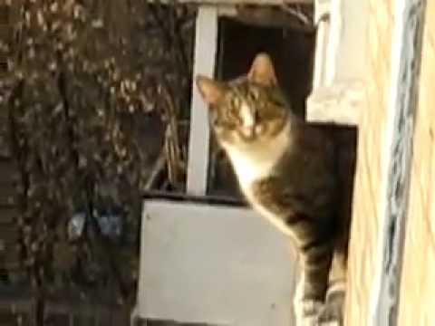 Die Parcour-Katze
