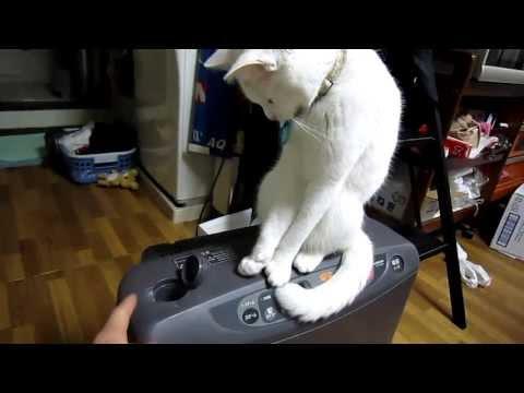 Katze vs. Deckel