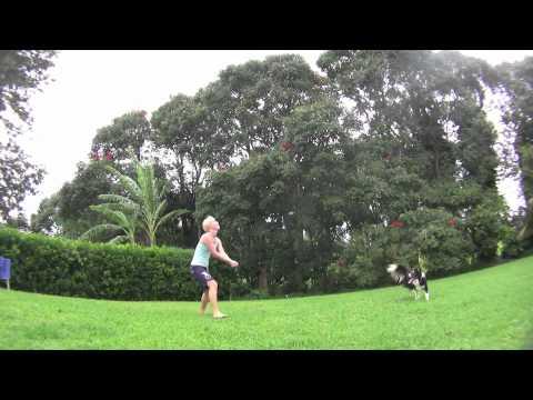 Der Volleyball-spielende Hund