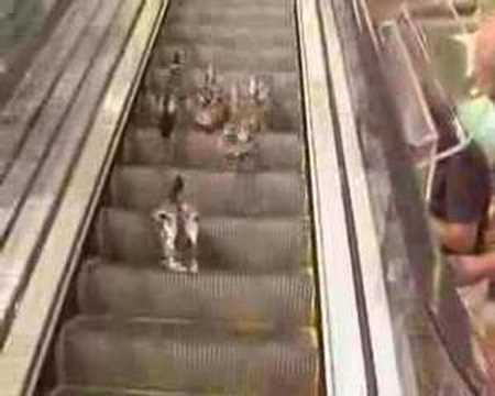 Enten vs. Rolltreppe